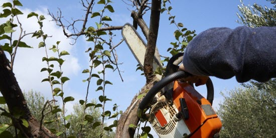Tree pruning in Costa Rica